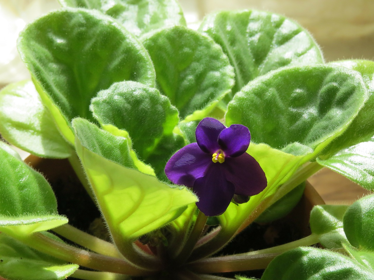 How to grow a violet 23