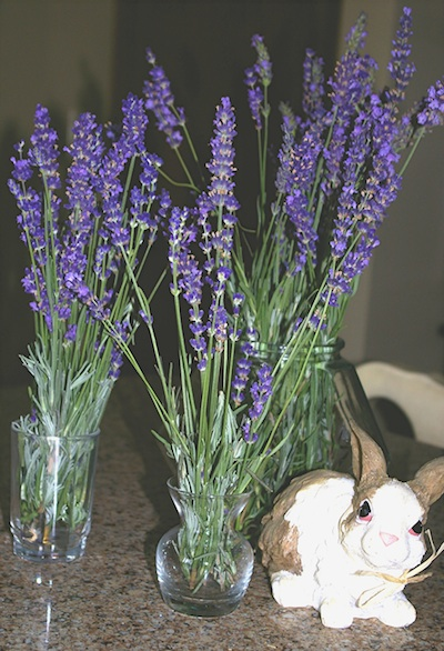 Best Flowers For Drying How To Dry Flowers The Old Farmers Almanac