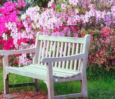 Garden Bench With Spring Flowers
