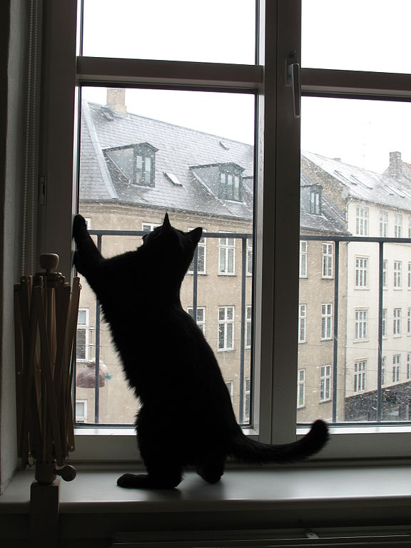 cats, weather, folklore, superstition | The Old Farmer's Almanac