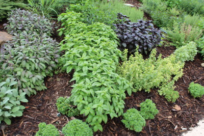 Parsley, Basils, Sages, Thyme And More Create An Eye Catching Small  Ornamental Bed That Is Perfect For Edging Patios Or Any Outdoor  Entertaining Area.