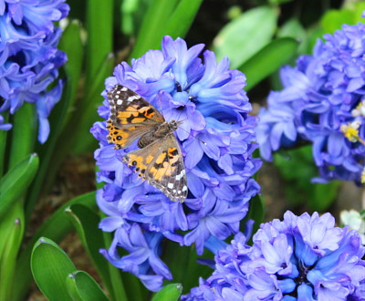 Attract Butterflies For More Flowers And Joy