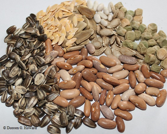 GMO (genetically modified organism) seeds definition and meaning ...