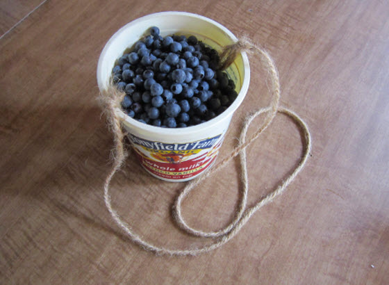 picking-blueberries-freezing-berries.jpg