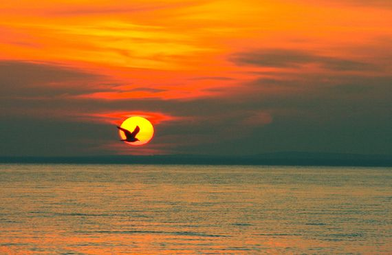 sunrise with seagull crossing sun