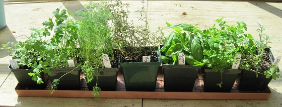Rate This Post: Select Rating, Give Windowsill Herb Garden ...