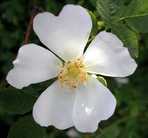Design a garden for flowers all summer great plant list the old midsummer mightylinksfo