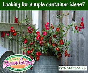 Looking for simple container ideas?
