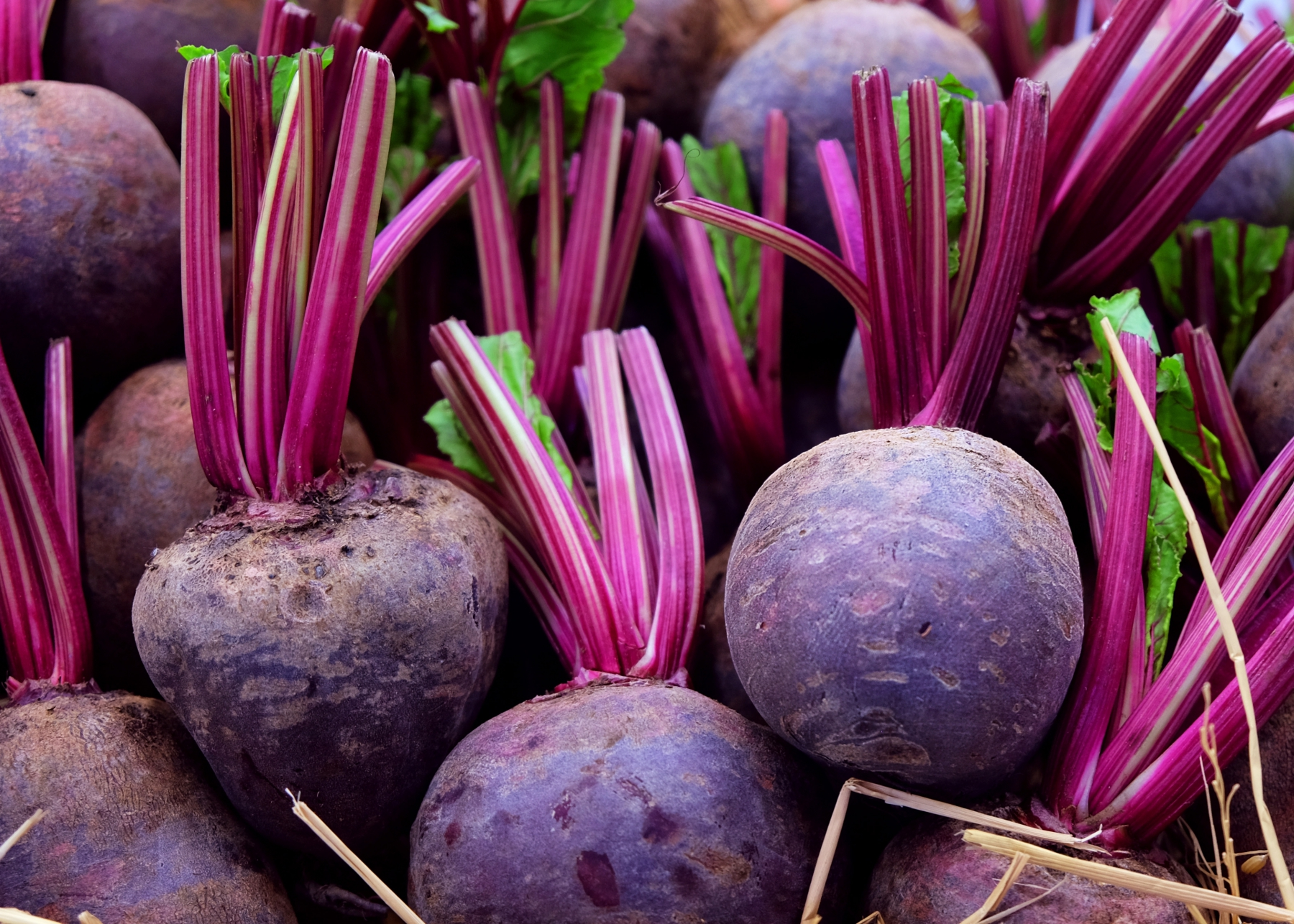 Beets Planting Growing And Harvesting Beets The Old