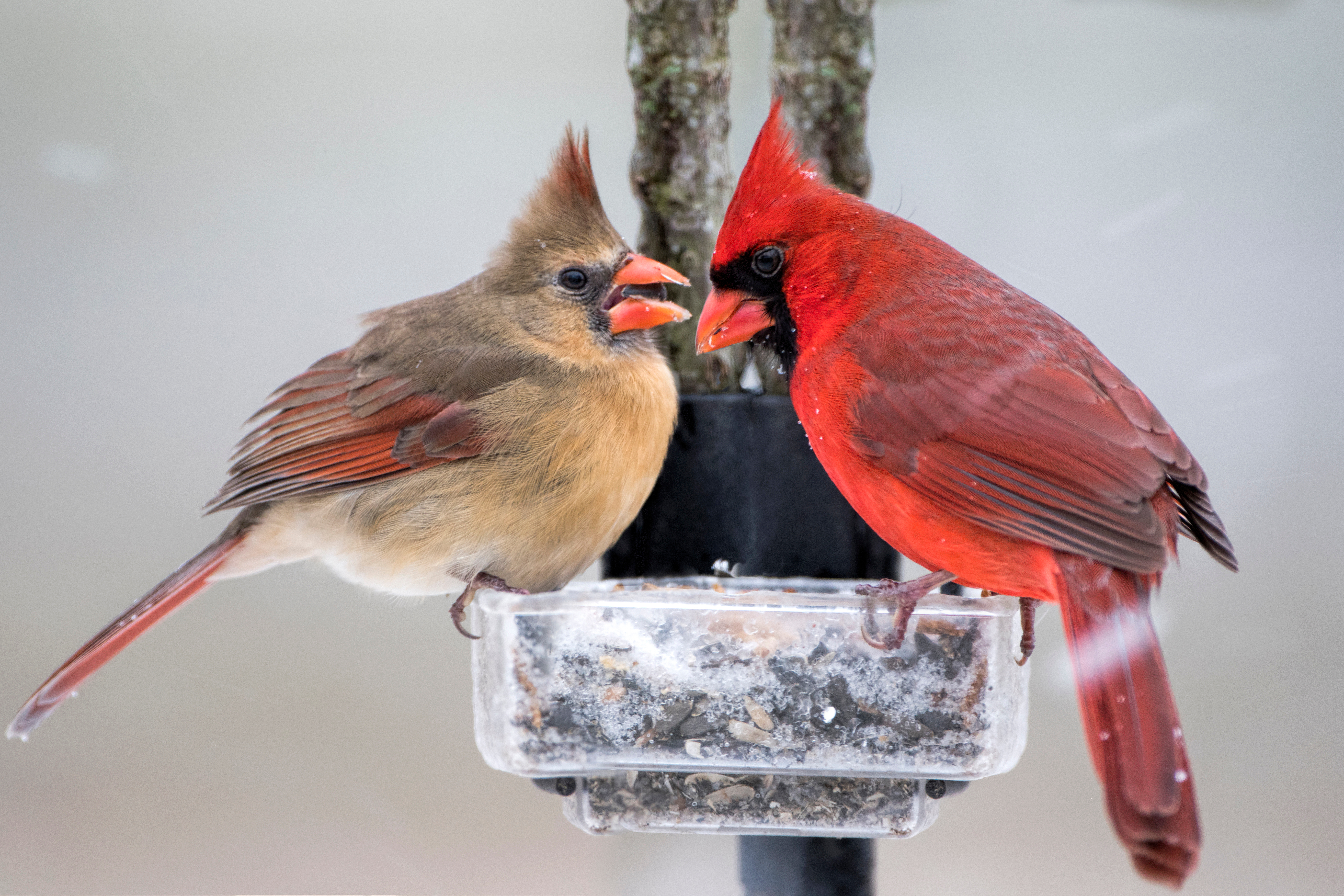 Winter bird food recipes suet seeds and more the old farmers best winter bird foods forumfinder Gallery