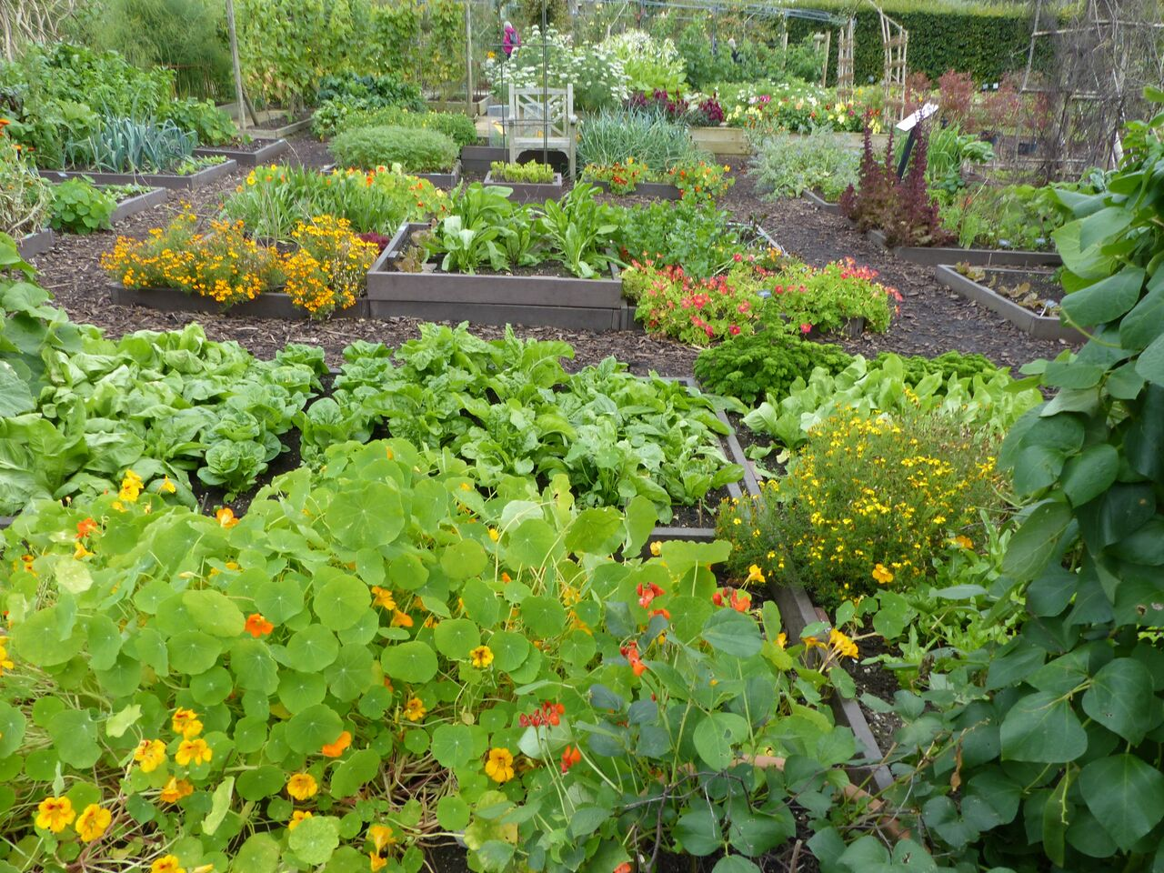 Companion Vegetable Garden Layout The Old Farmer S Almanac