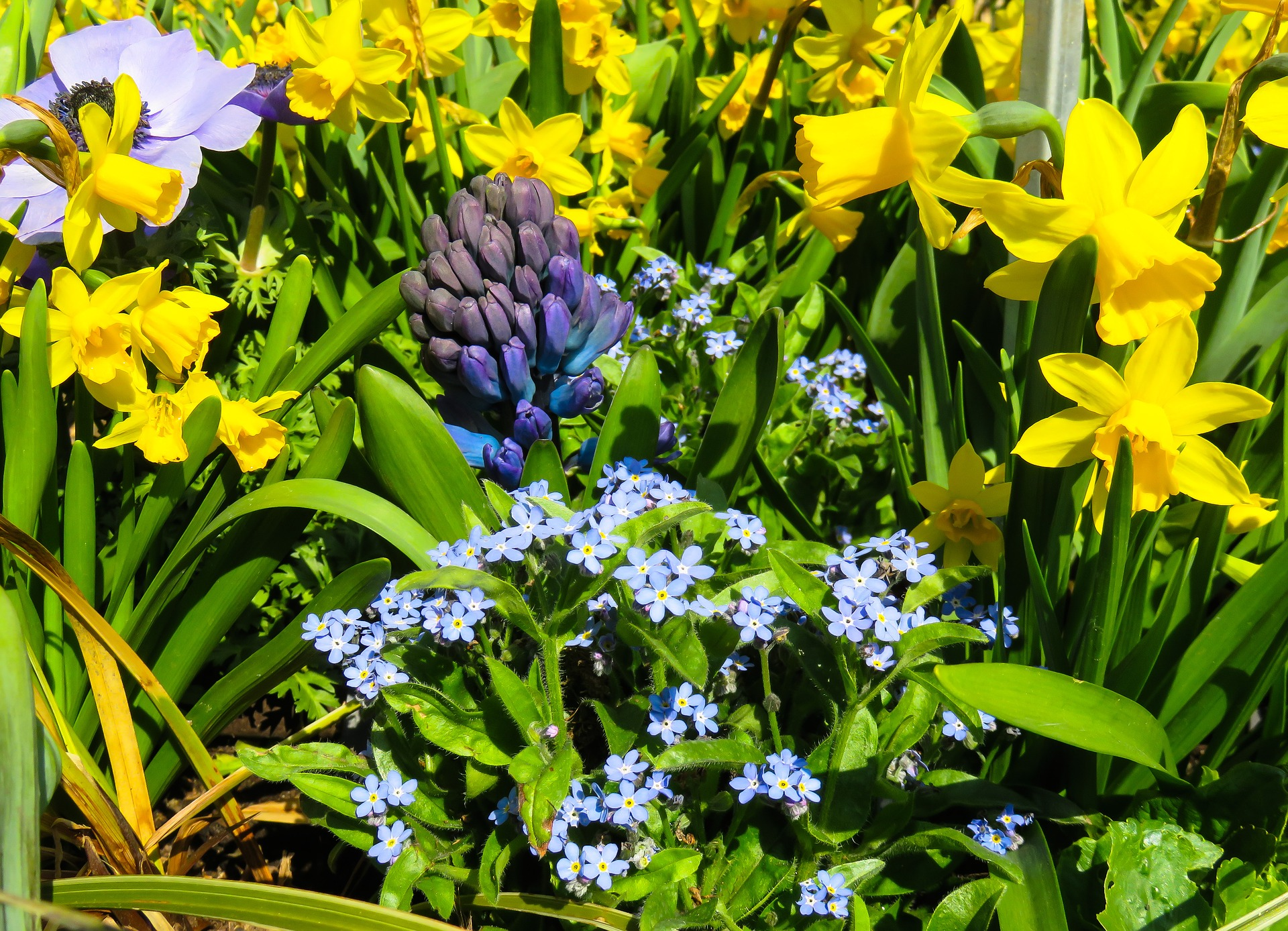 Spring Flowering Bulbs To Plant In Fall Bulb Planting Guide The Old Farmer S Almanac