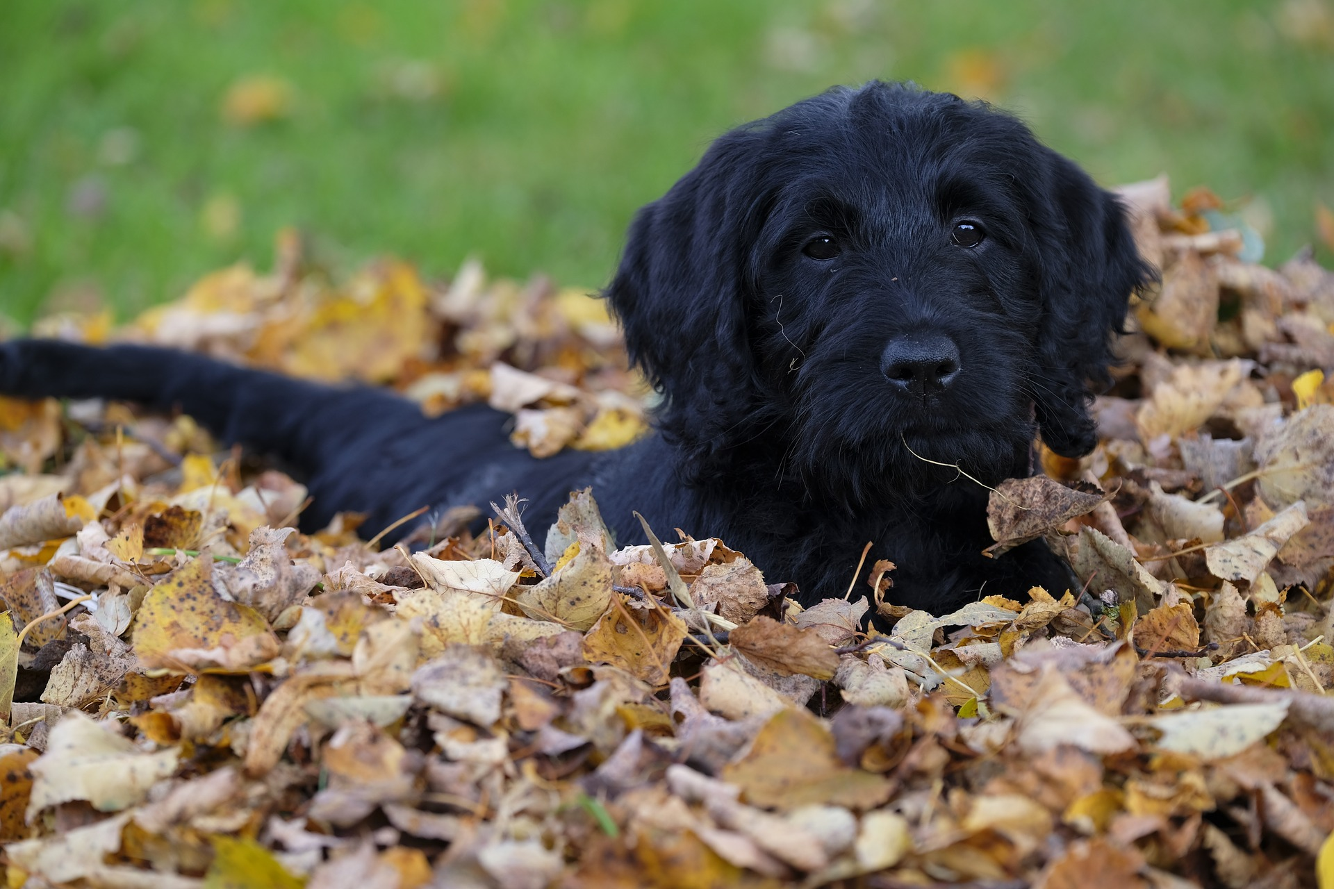 The Best Ways to Use Fall Leaves in the Garden | The Old Farmer's Almanac