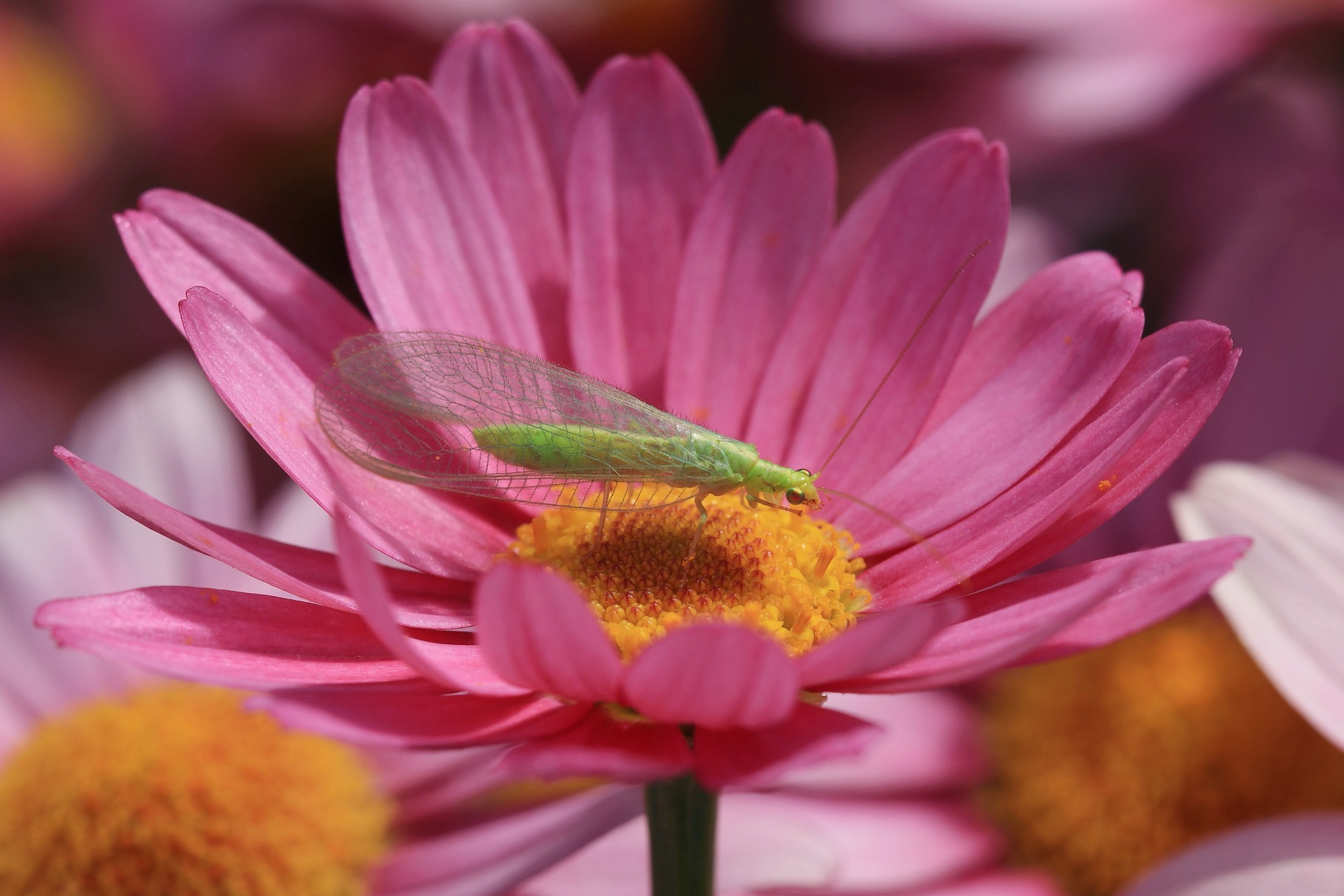 Beneficial Insects: Meet the Beneficial Bugs in Your Garden (with Pictures)  | The Old Farmer's Almanac