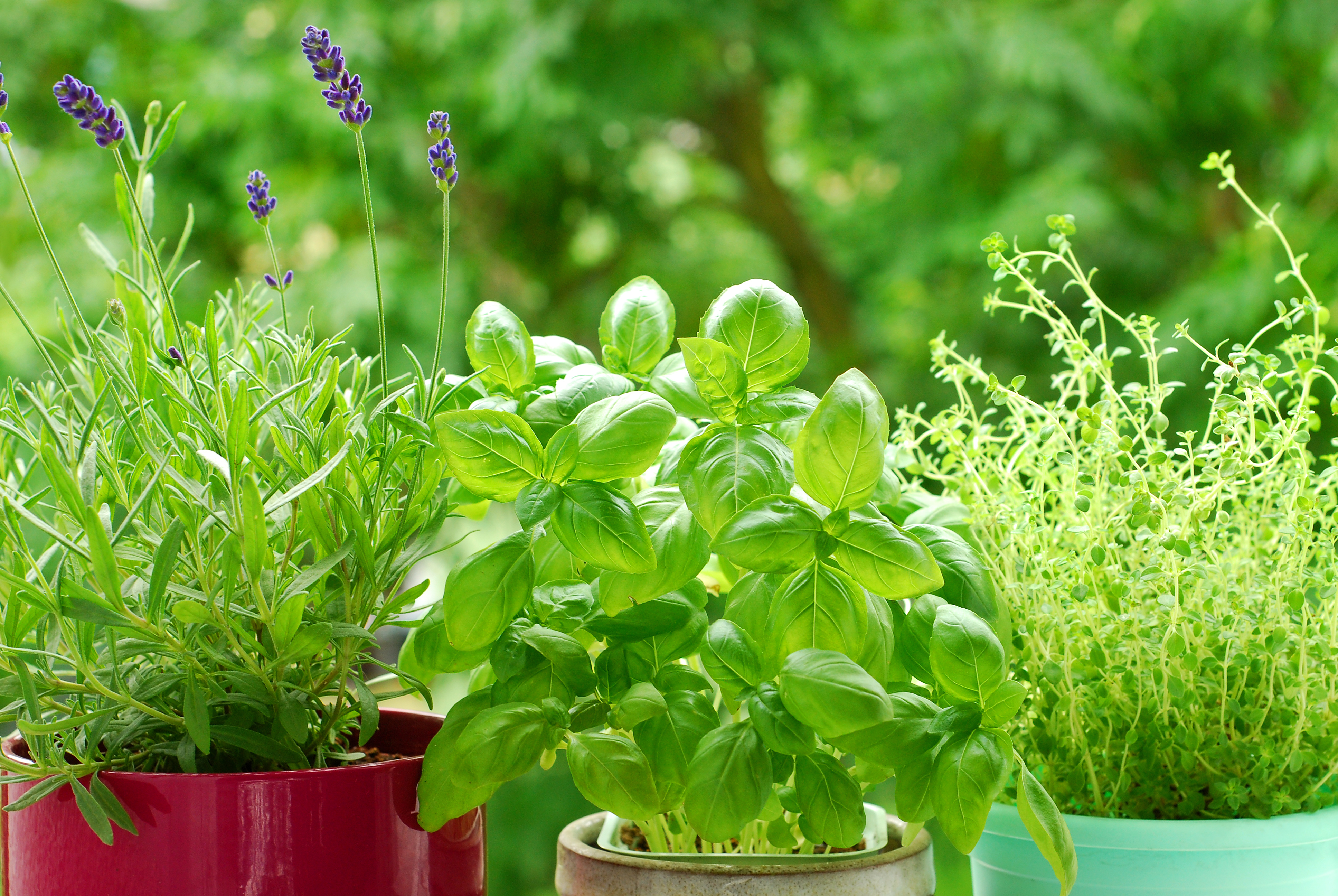 Companion Planting Herbs Best Herbs To Plant For The Garden Kitchen The Old Farmer S Almanac