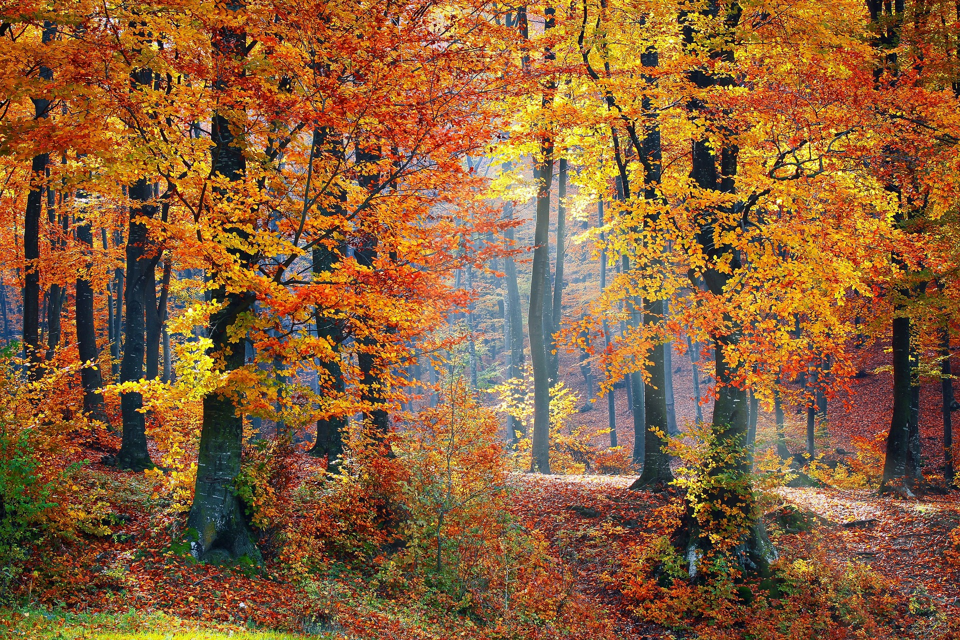 What To Expect From Fall Foliage This Year How Weather Affects Autumn Leaves The Old Farmer S Almanac