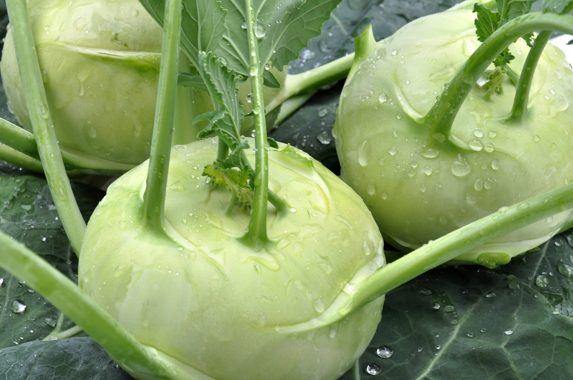 Kohlrabi How To Plant Grow And Harvest Kohlrabi The Old Farmer S Almanac