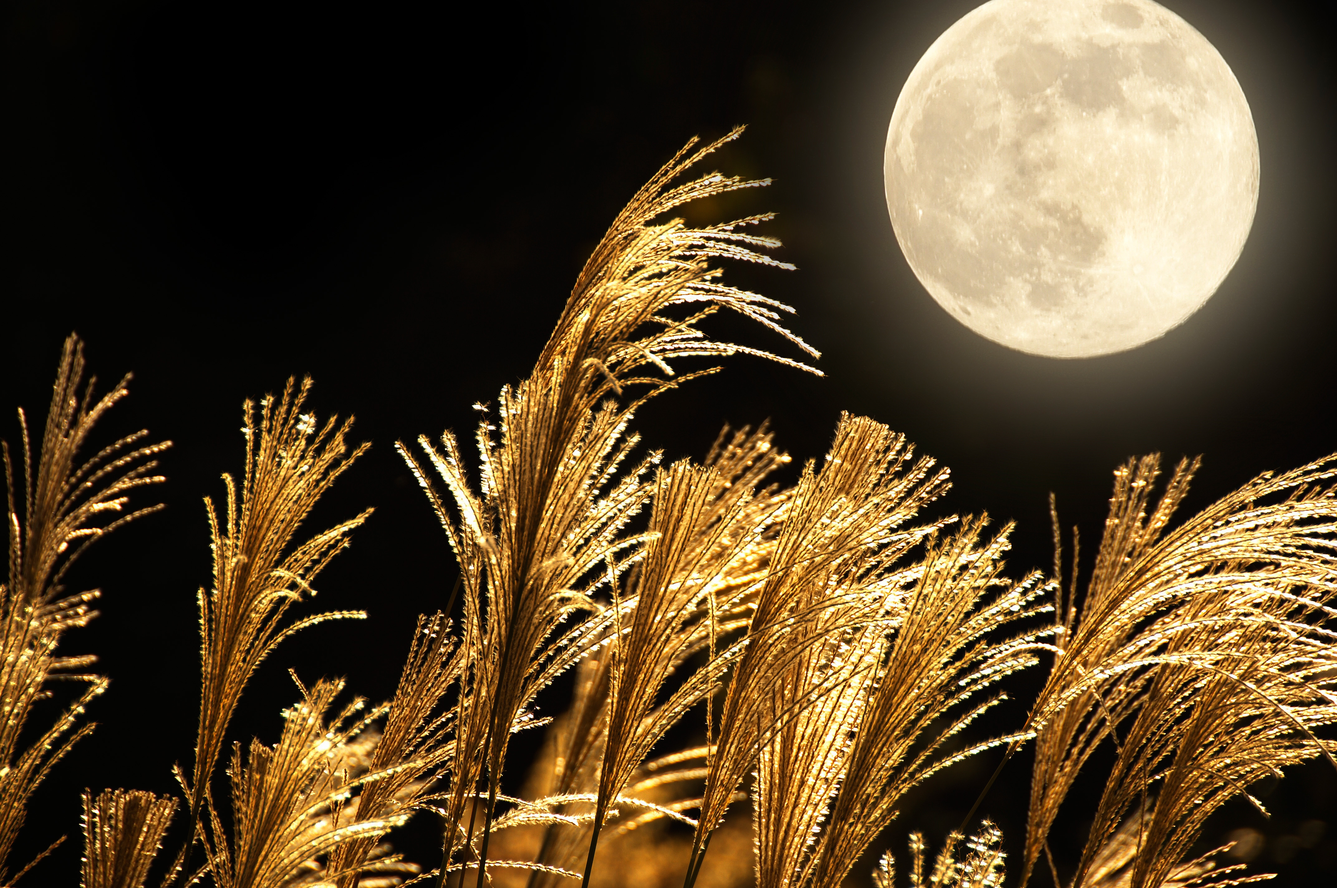 The Full Harvest Moon Rises Friday the 13th!