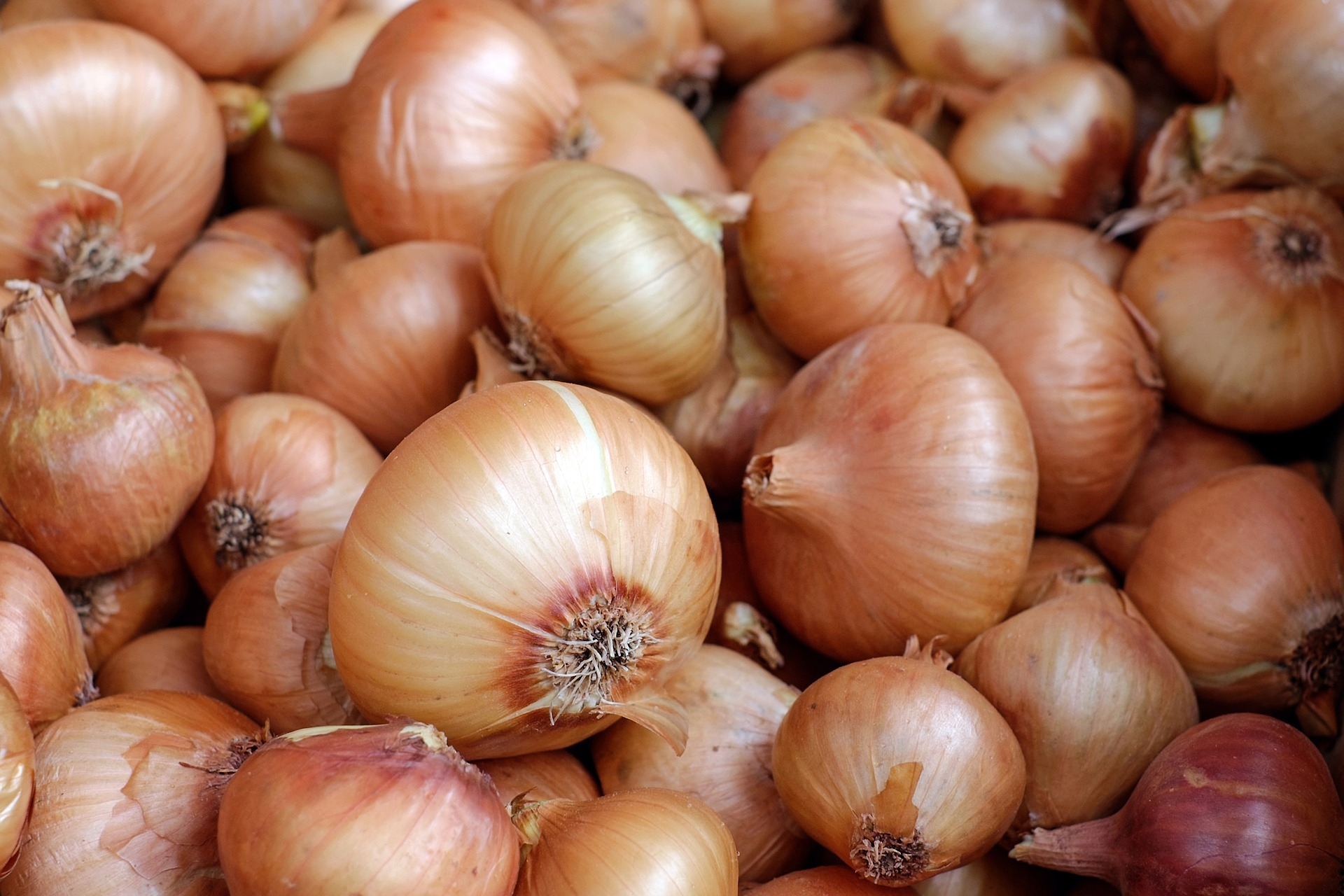 Onions: Planting, Growing, and Harvesting Onions | The Old ...