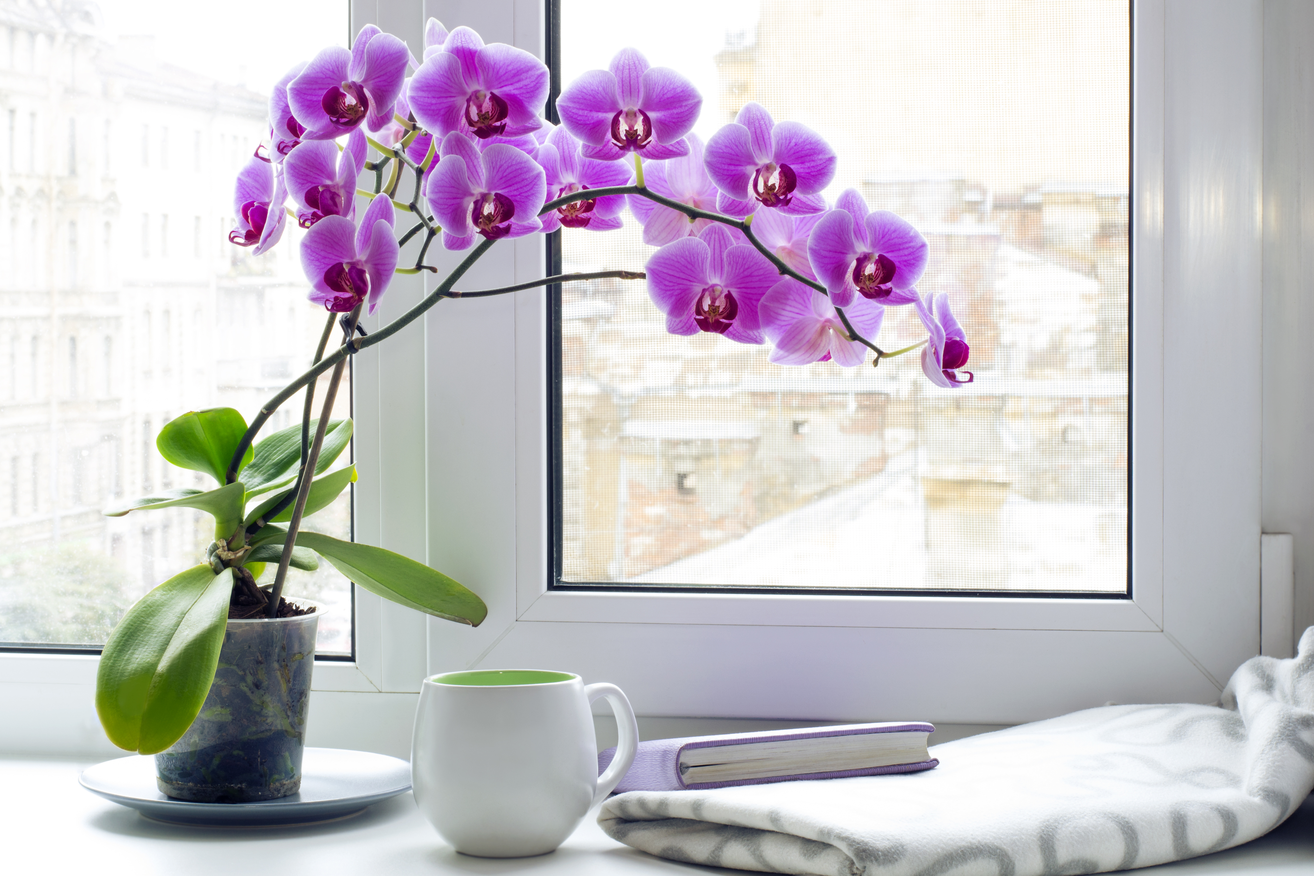 Orchids How To Grow And Care For Orchids The Old Farmer S Almanac