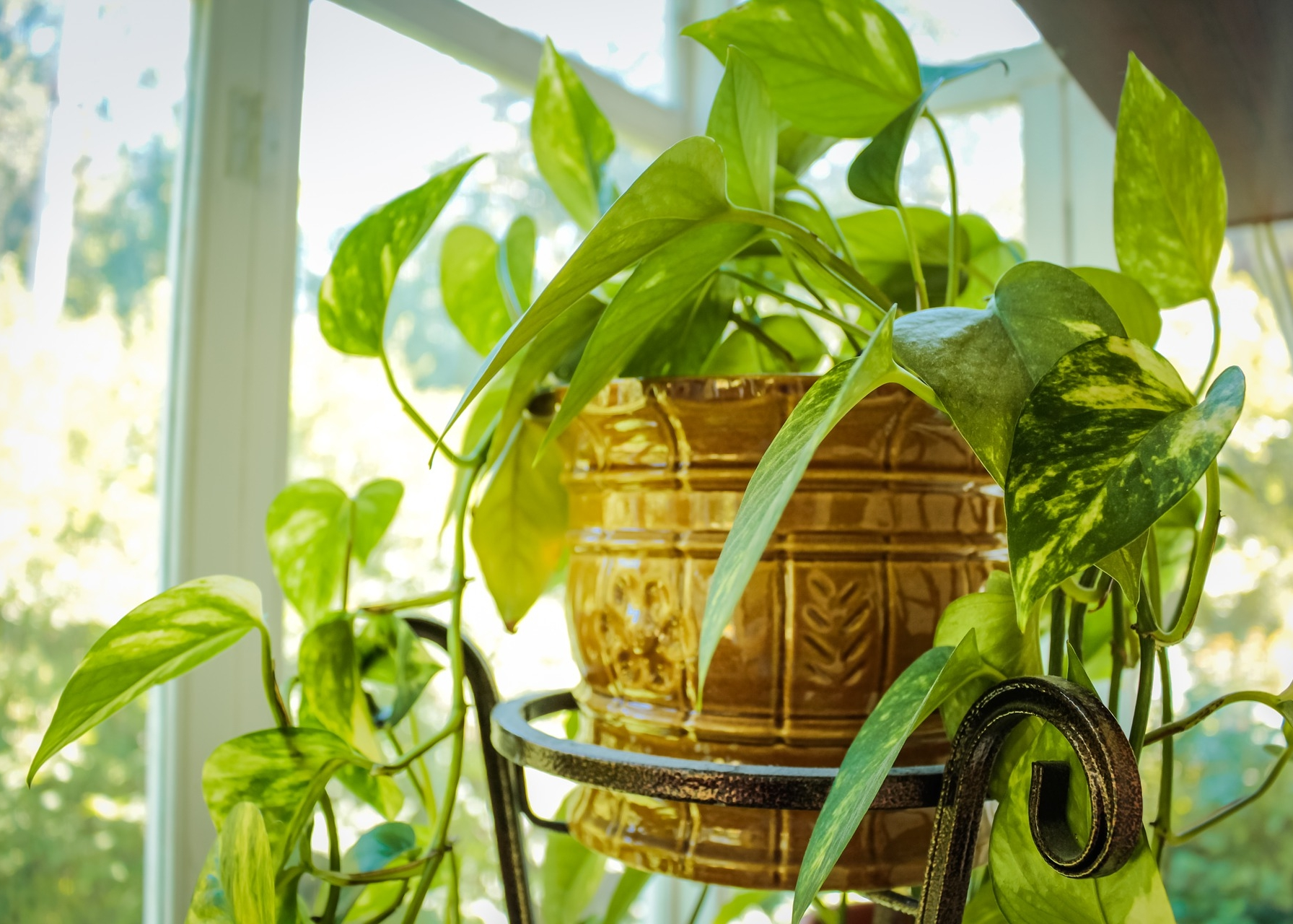Pests of houseplants - variety and ways to combat them