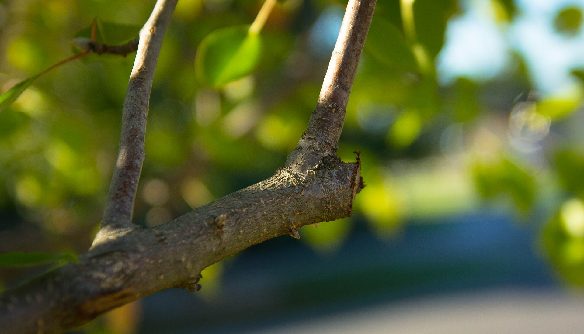 Spring Pruning Chart Trees And Shrubs The Old Farmers Almanac