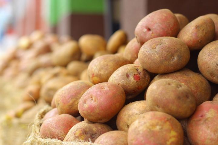 Potatoes Planting Growing And Harvesting The Old Farmer S Almanac
