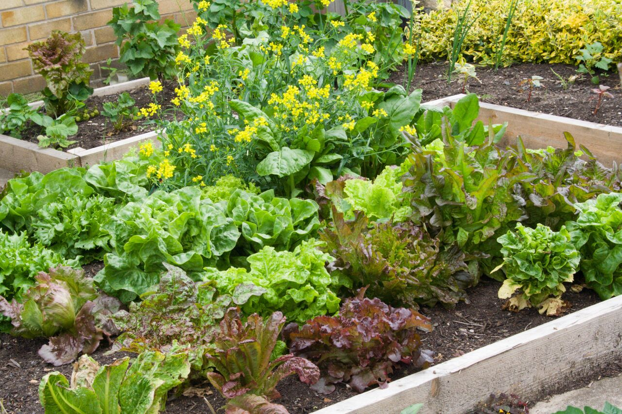 Small Vegetable Garden Plans Layouts The Old Farmer S Almanac