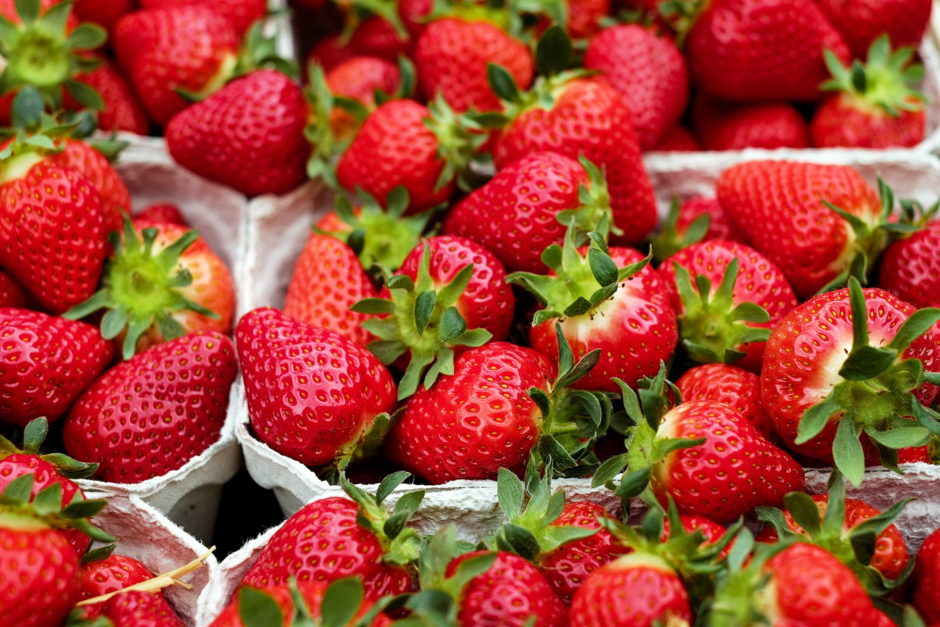 Strawberries: Planting, Growing, and Harvesting Strawberry Plants ...