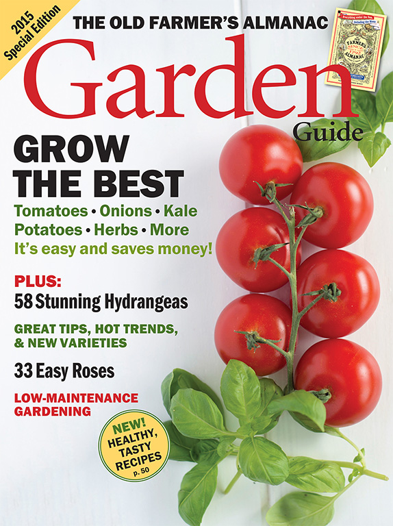 best vegetable gardening magazines garden ftempo