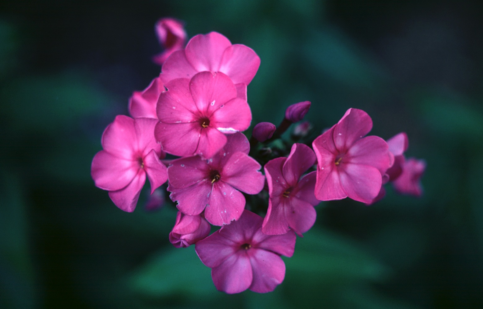 Meaning Of Flowers Old Farmers Almanac