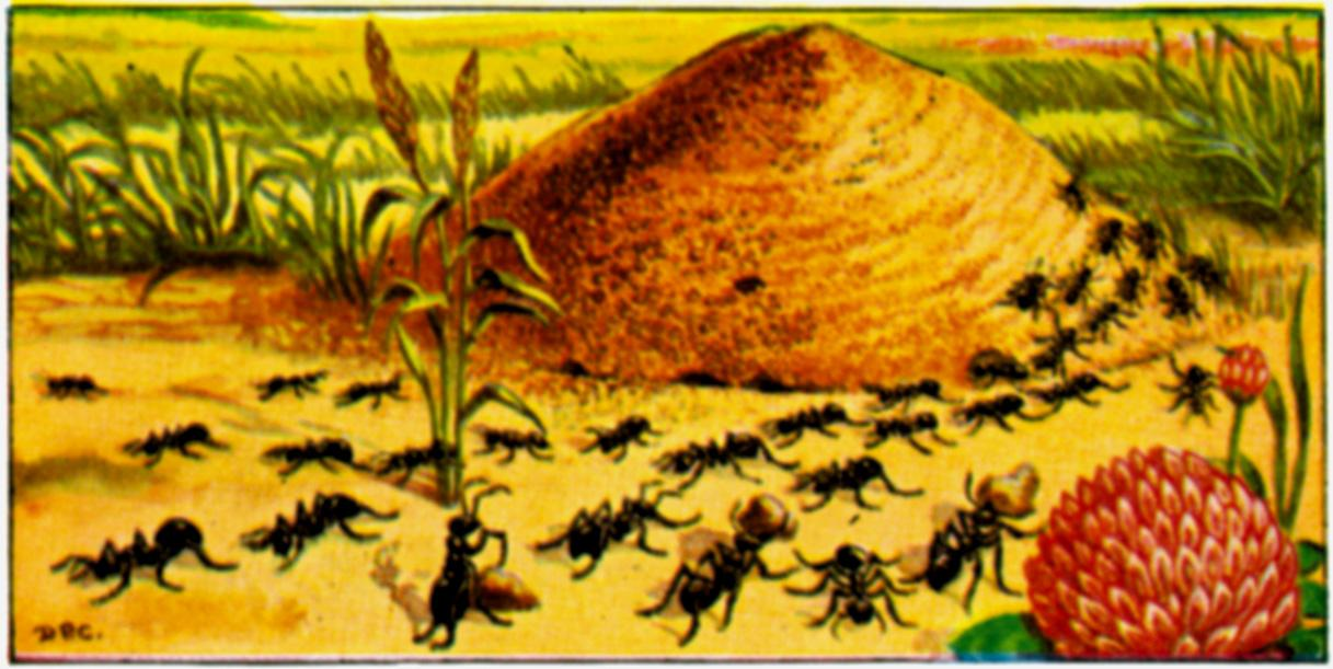 Ants In The Garden Benefits Of Ants The Old Farmers Almanac
