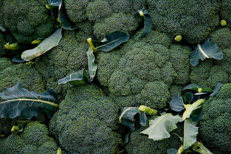 Broccoli Planting Growing And Harvesting Plants The Old Farmer S Almanac