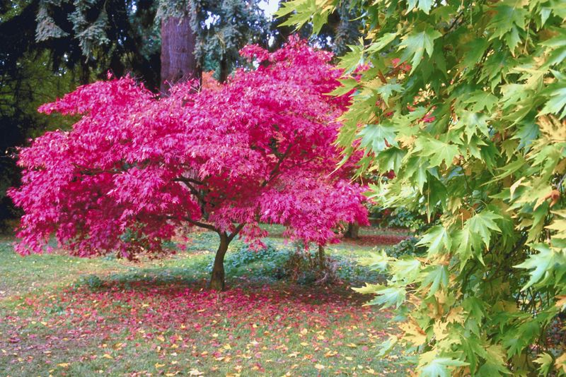 Creating A Fall Garden Shrubs And Trees For Fall