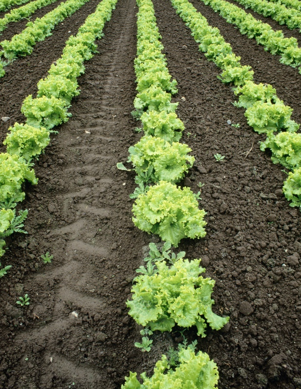 Image Result For Where Is The Best Place To Put A Vegetable Garden