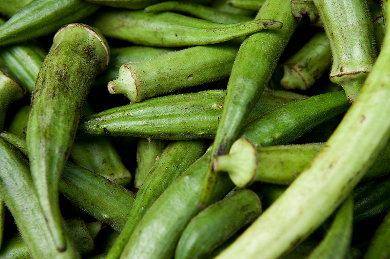 Okra Planting Growing And Harvesting Okra Plants The
