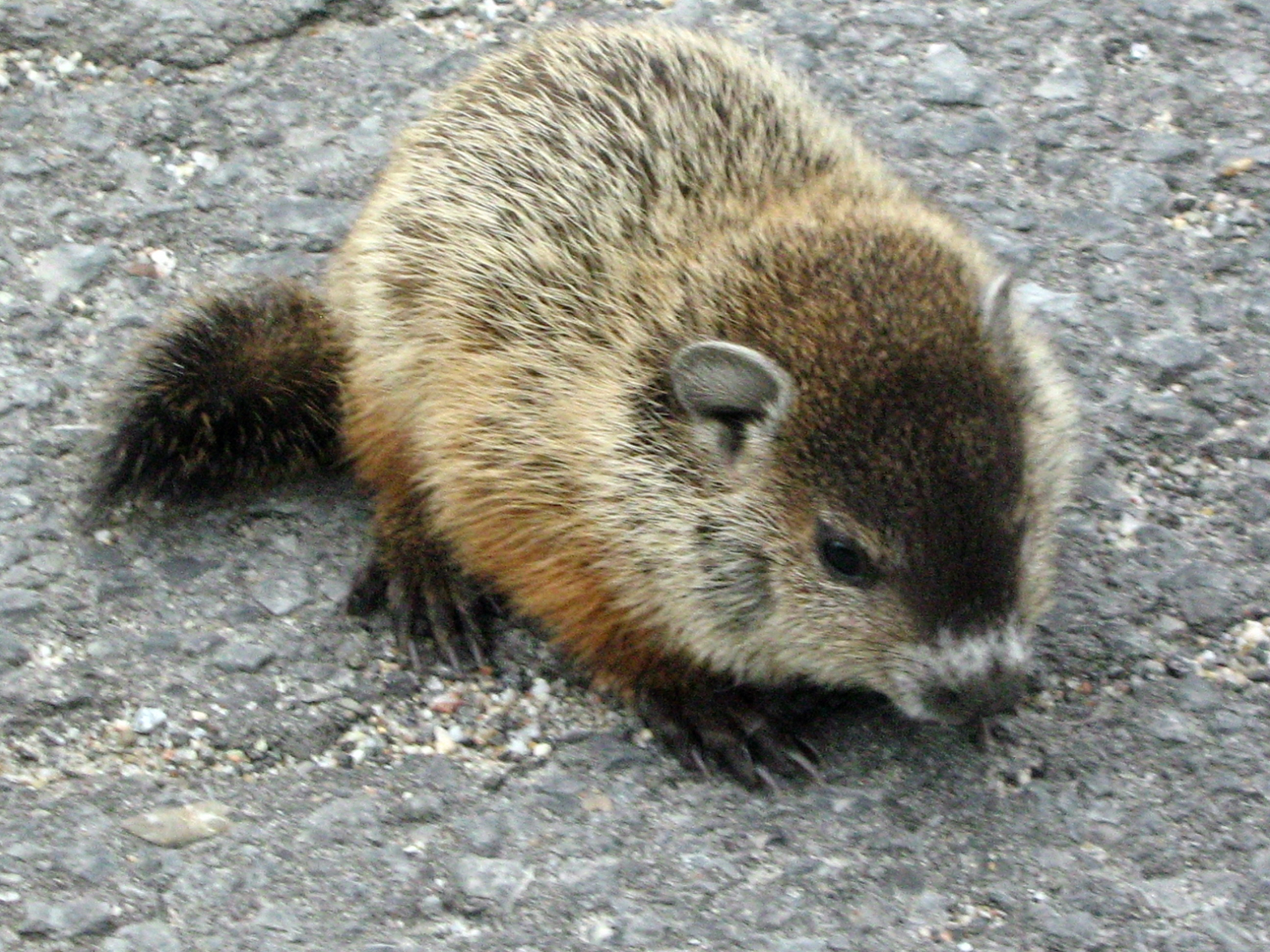signs of spring groundhog day weather predicting the old