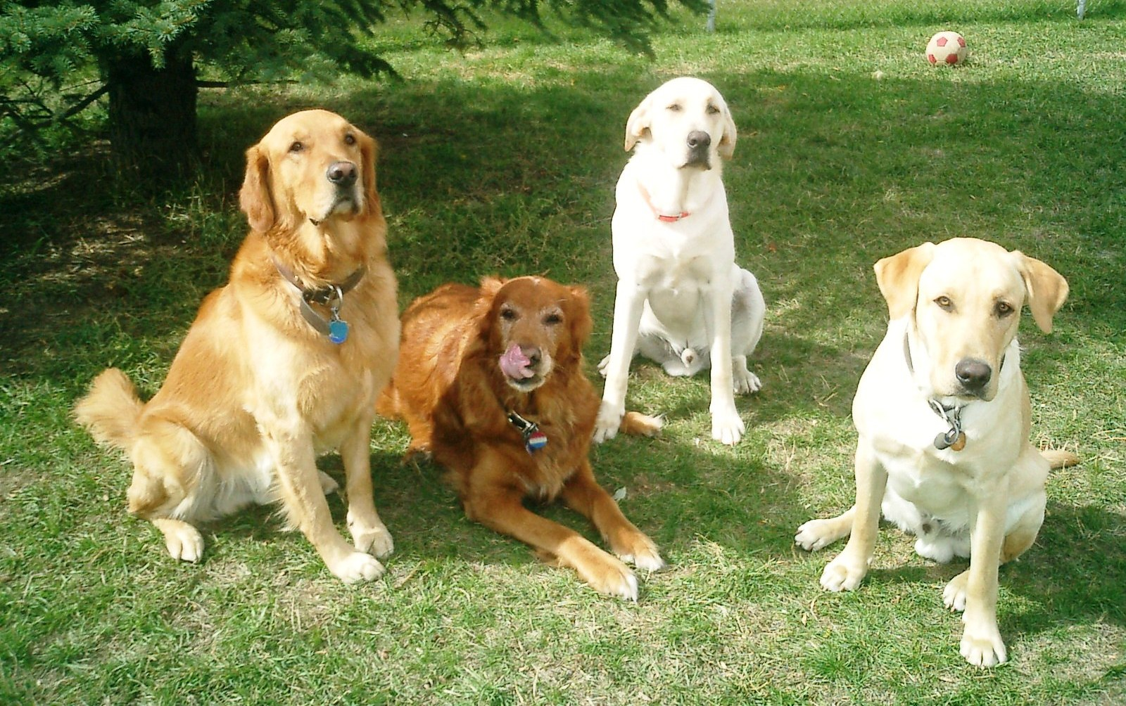Dog age chart dog years to human years how old is my dog the pet food recipe doggie meatloaf nvjuhfo Image collections