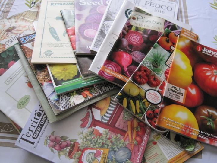 Seed Catalogs in Winter