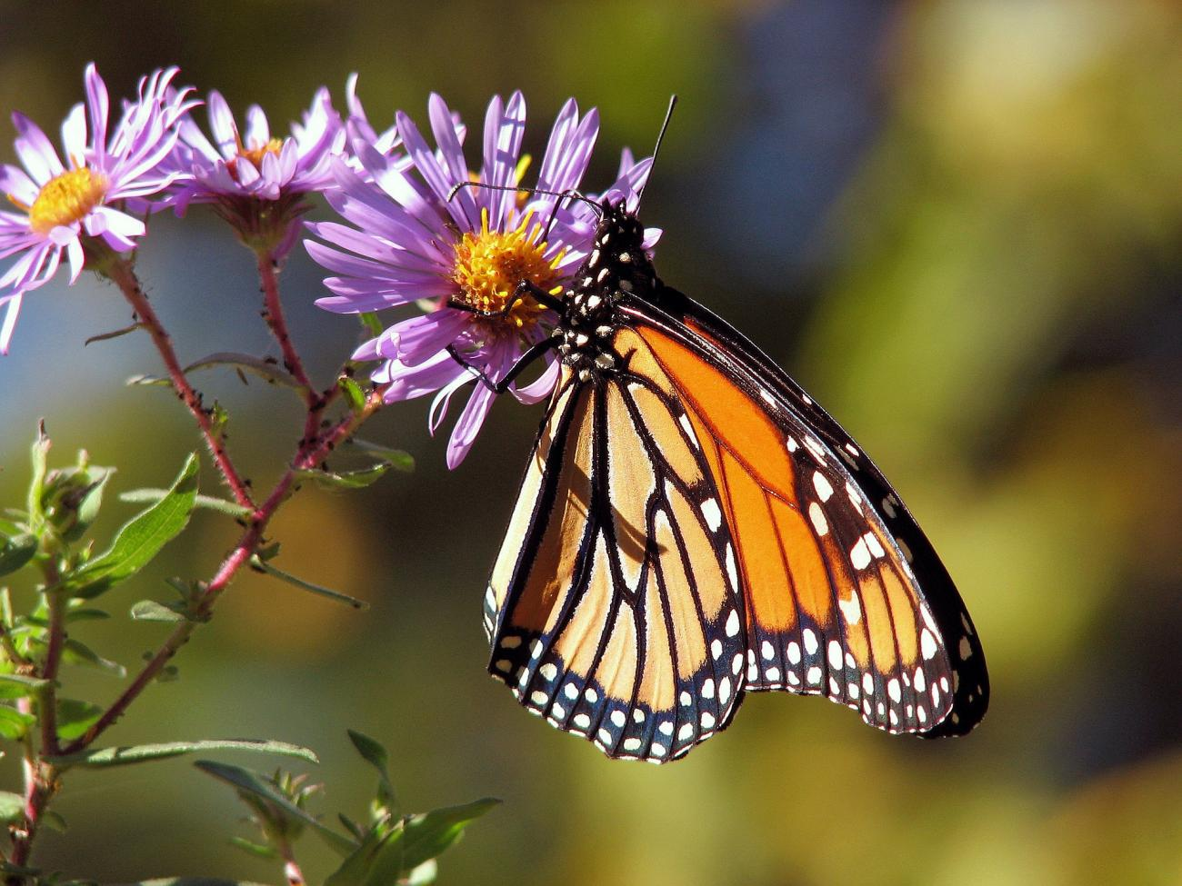 Superieur Attract Butterflies To Garden
