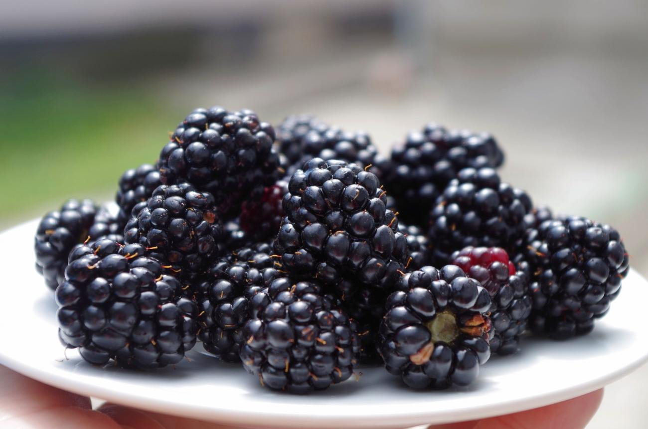 Blackberries on Dish