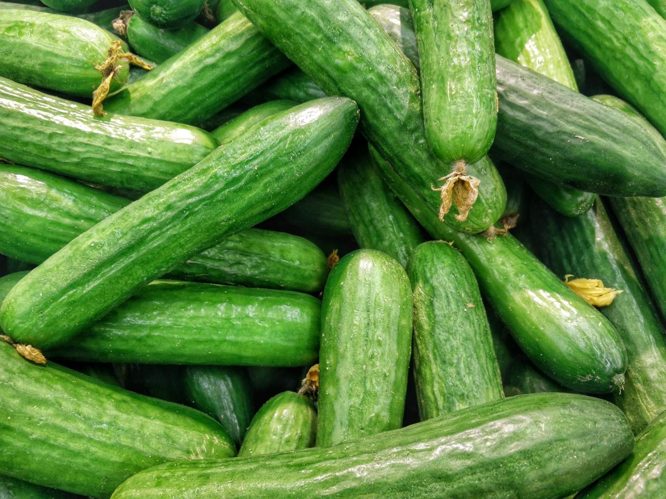 How long does it take for cucumbers to mature pic 372