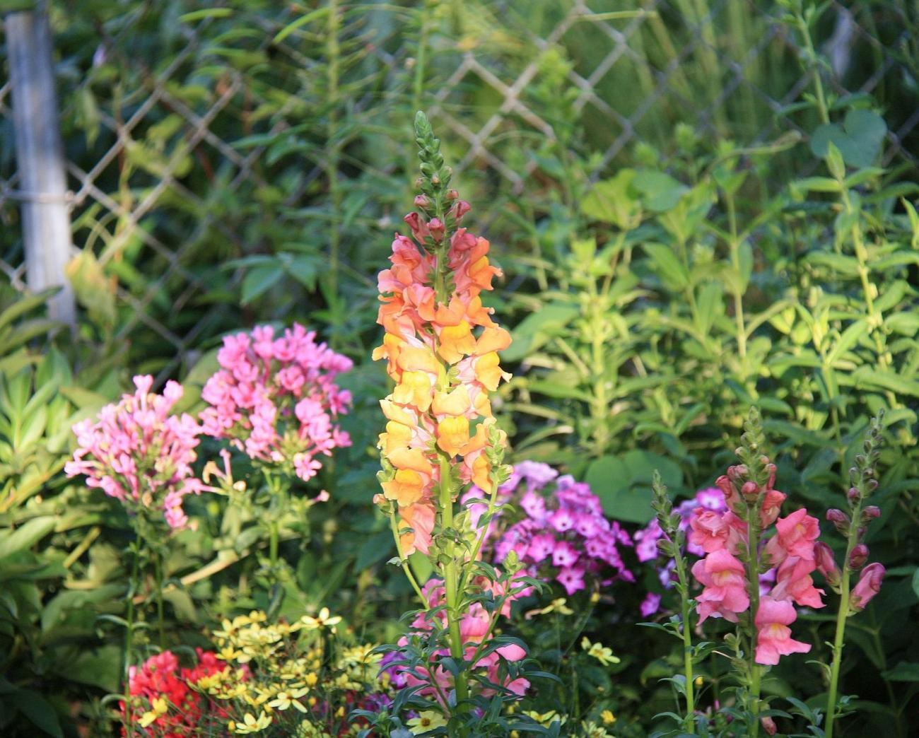 design a garden for flowers all summer great plant list the old