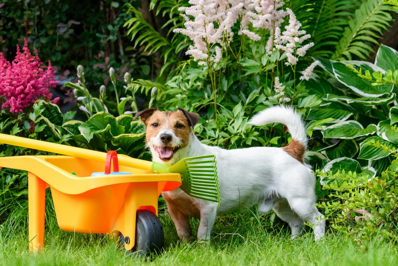 Poisonous Plants for Dogs, Cats, and Other Pets | The Old