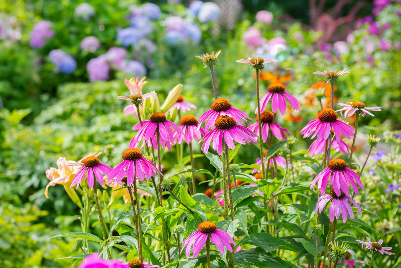 6 Easy Perennial Plants For A Low Maintenance Garden The Old