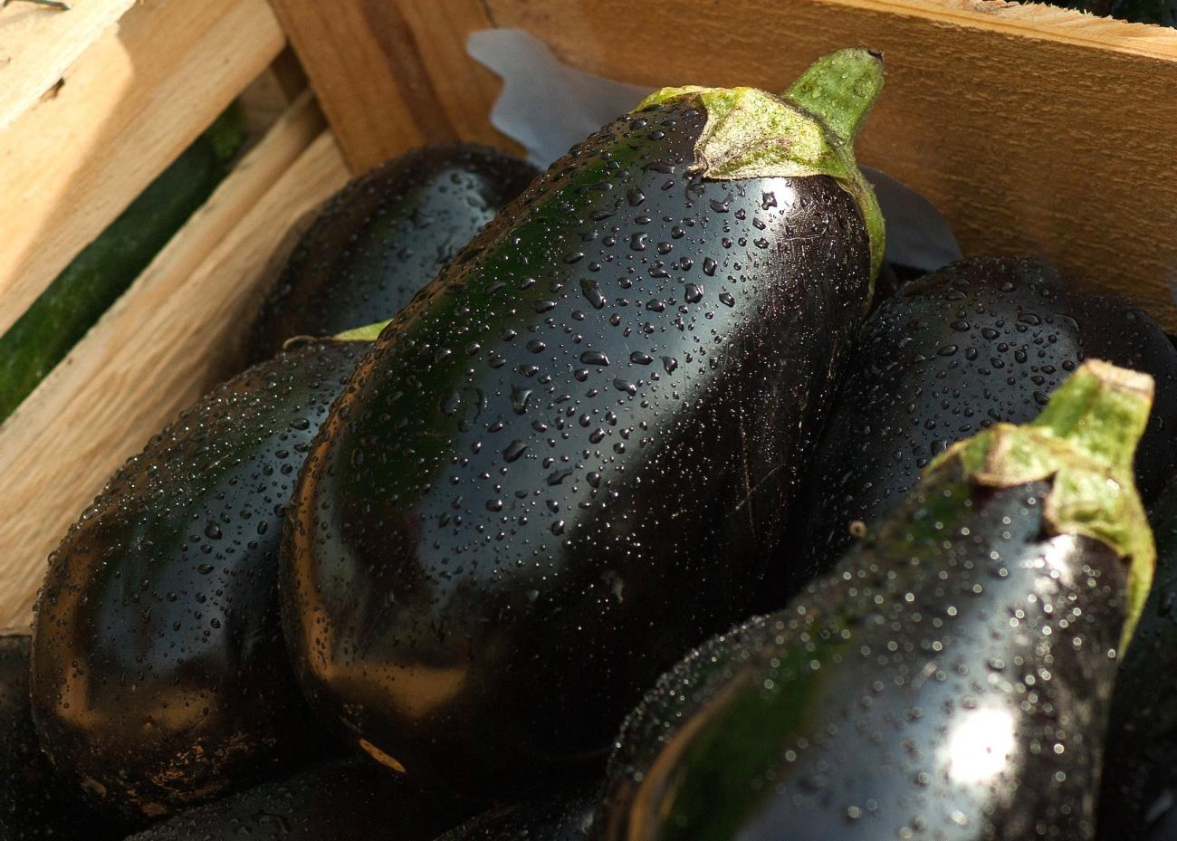 Eggplant: Planting, Growing, and Harvesting Eggplants | The Old
