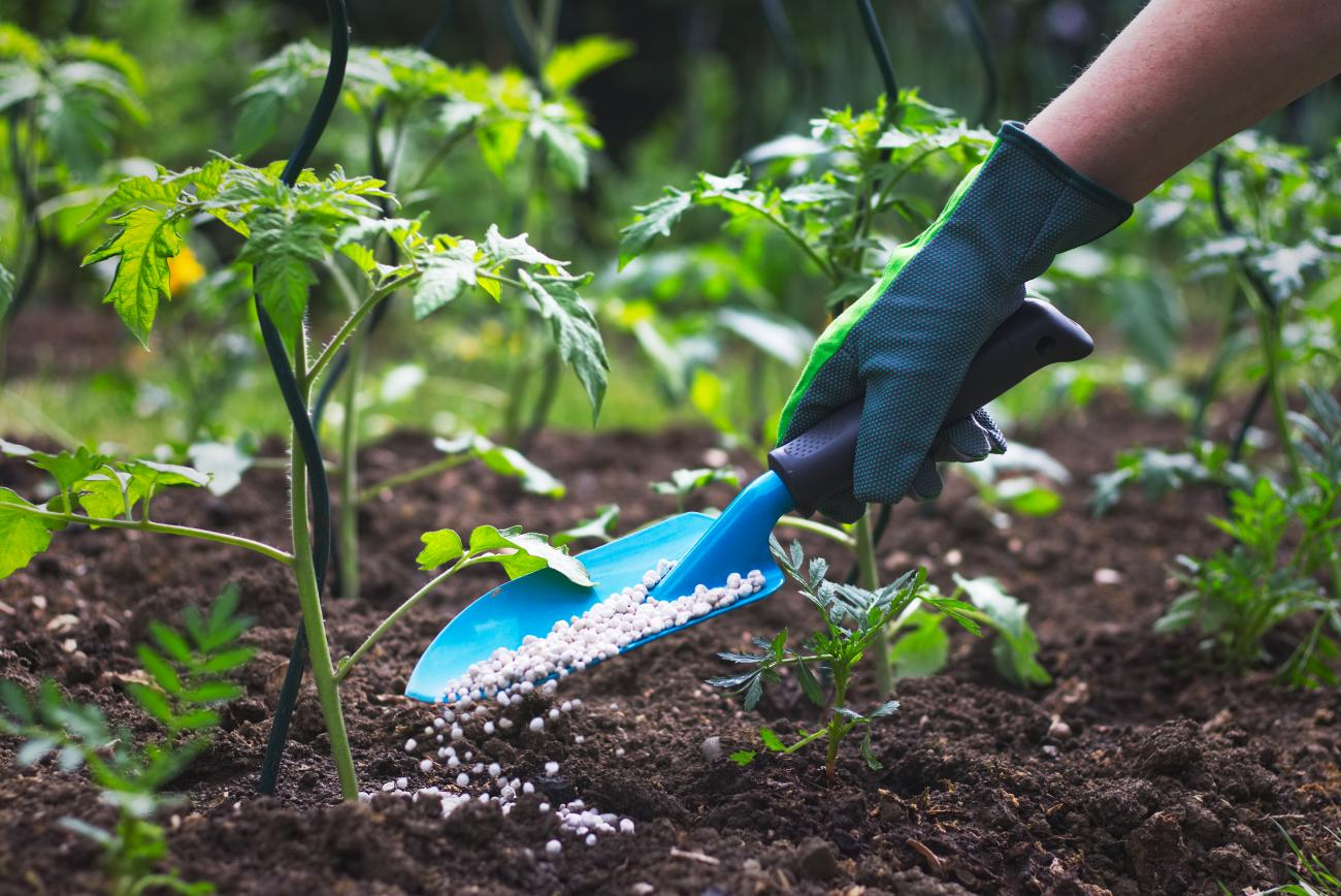 How To Apply Fertilizers To Your Garden Old Farmer S Almanac
