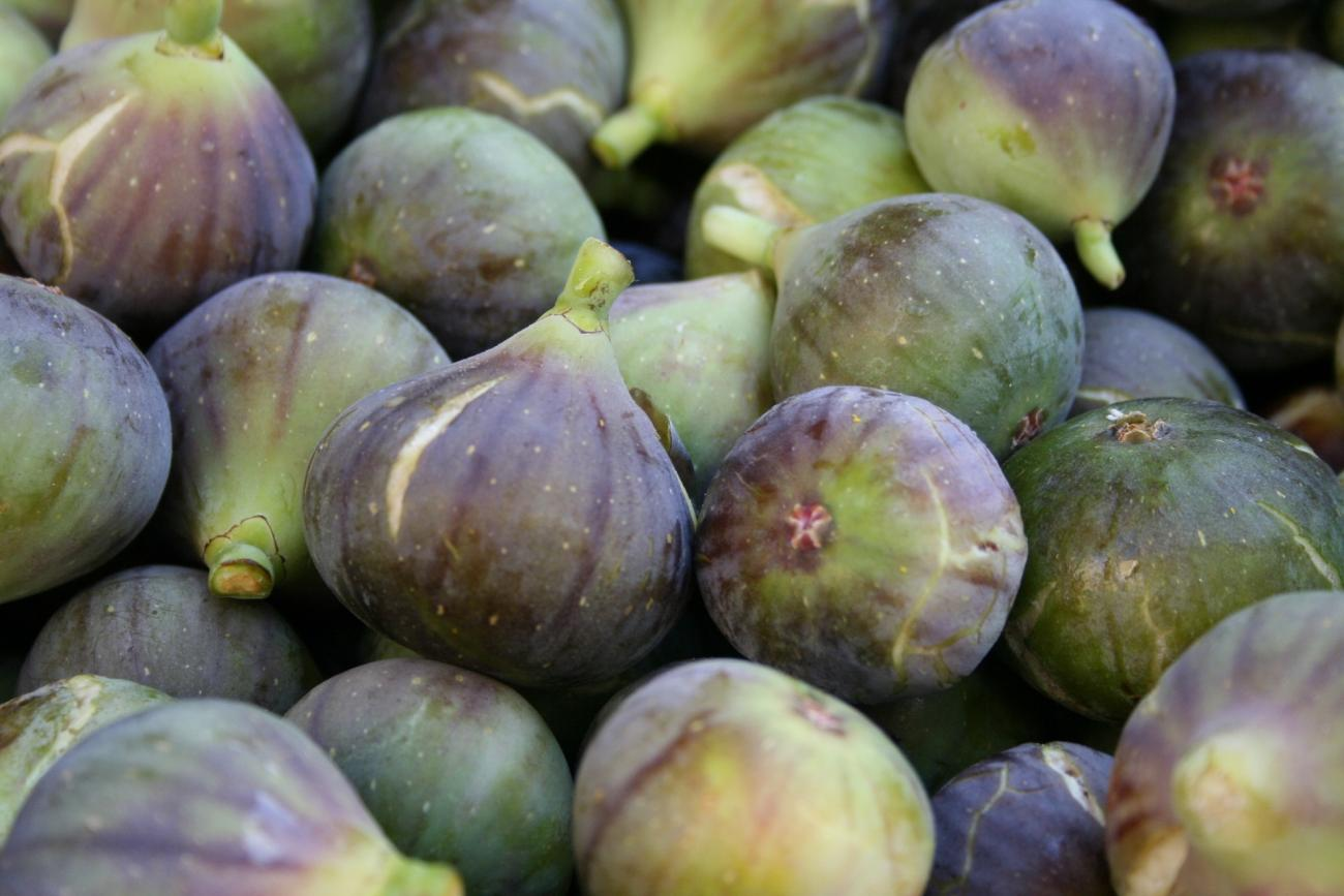 Fig Trees: Planting, Growing, and Harvesting Figs | The Old