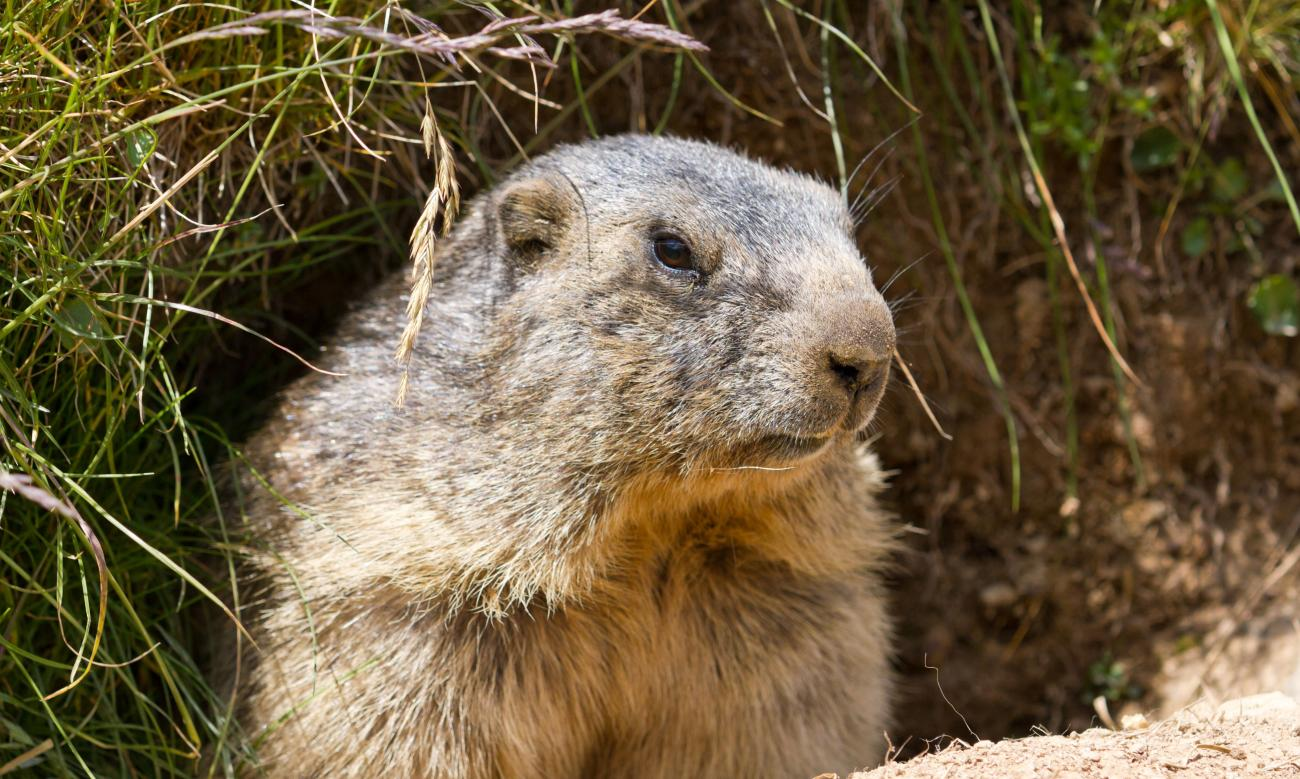 Groundhog Emerging