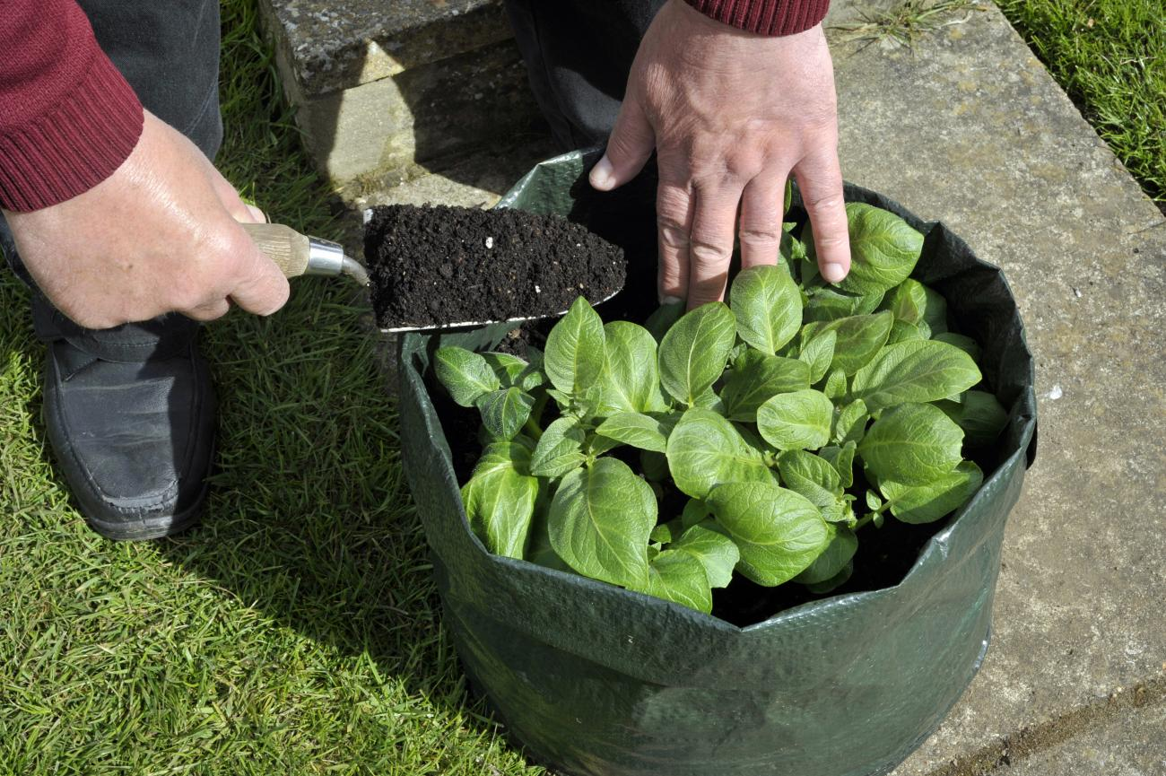 Discover Grow Bags: An Alternative Plant Container | Old Farmer's ...